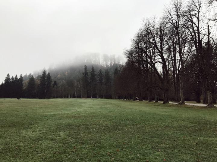 grudgy field.JPG